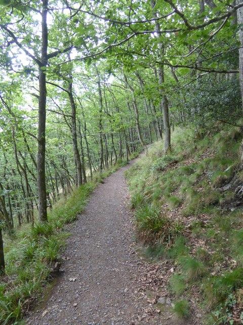 Hunter's Path in Drewston Wood
