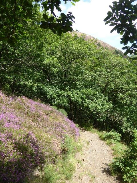 Hunter's Path above Fingle Bridge