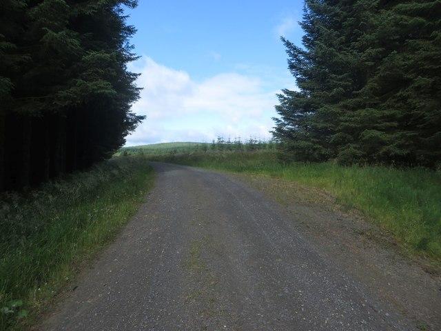 Forest track near Chirdonhead