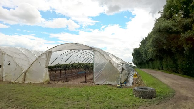 Small section of polytunnels by Wheatley Wood Farm