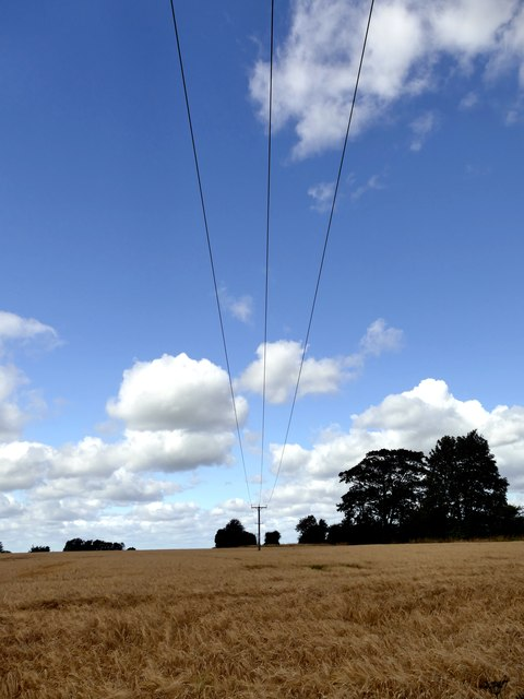 Power lines over a field of barley