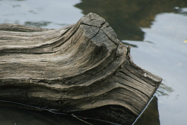 View of a log in the lake at Connaught Water