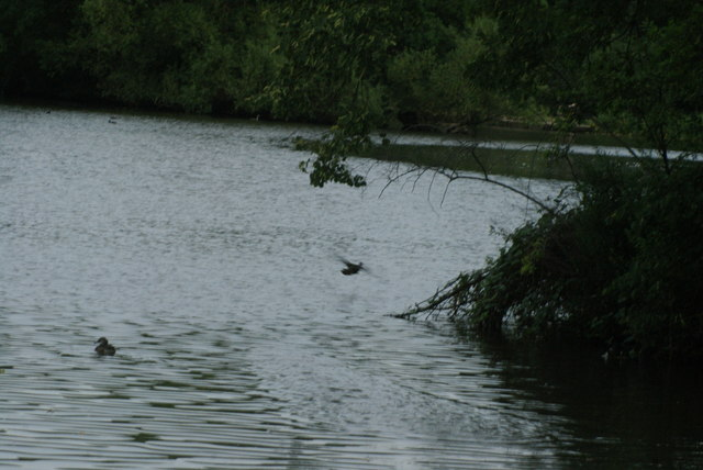 View of a duck taking flight off the lake at Connaught Water