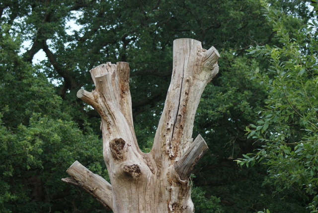 View of a tree trunk next to the wooden walkway at Connaught Water