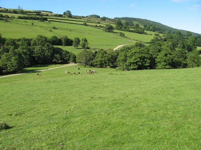 Vron hillside