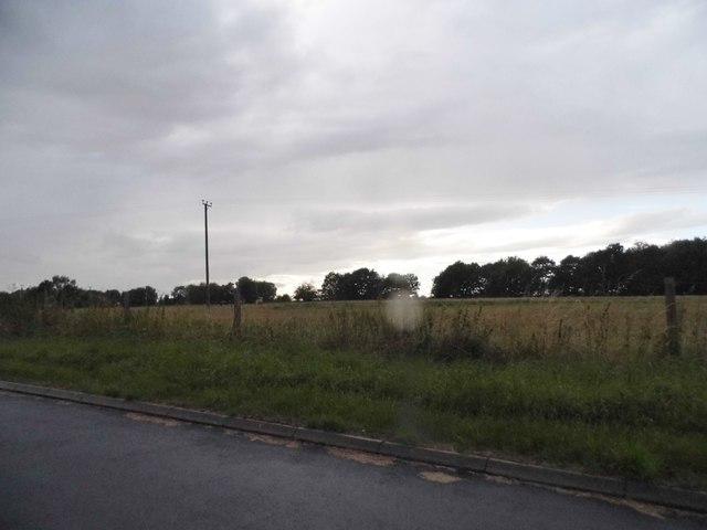 Field in Shefford Woodlands