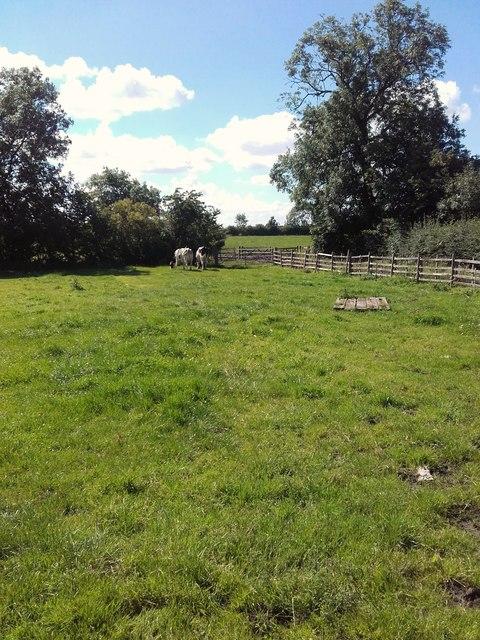 Cote Hill Farm