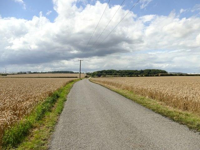 The road to Saundby Park Farm