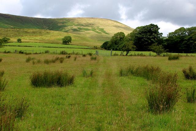 Rough Pasture beside Dinkling Green Brook