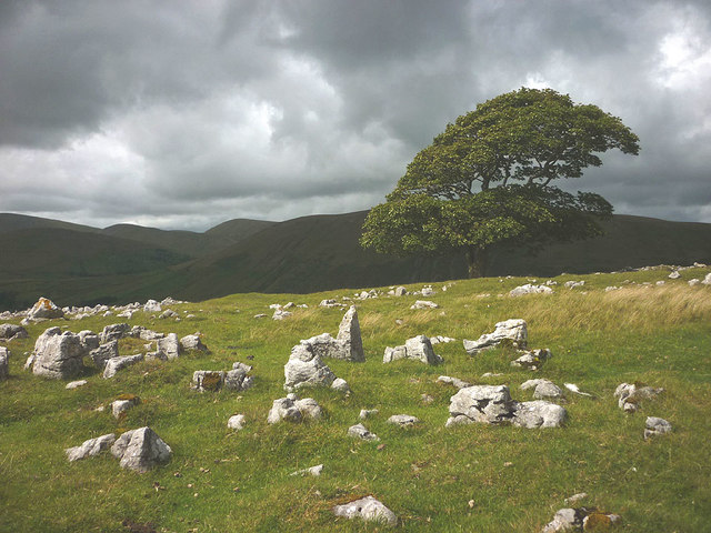 The big tree on Fell End Clouds