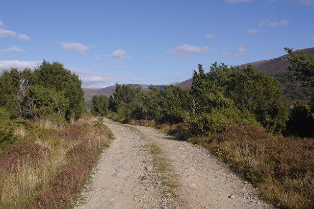 Road in Glen Feshie