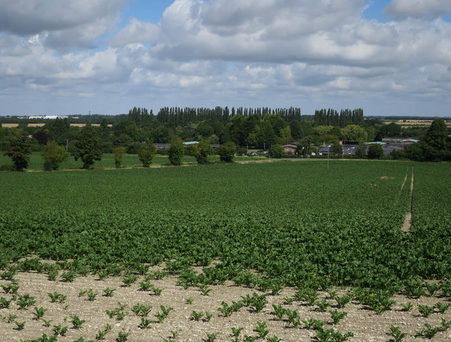 Field by Fulbourn