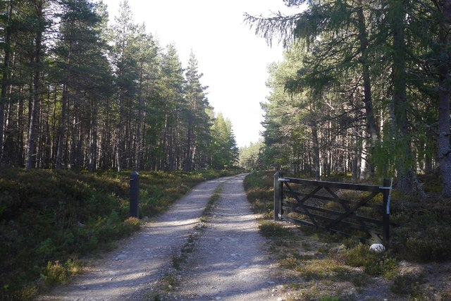 Forest road, Glen Feshie