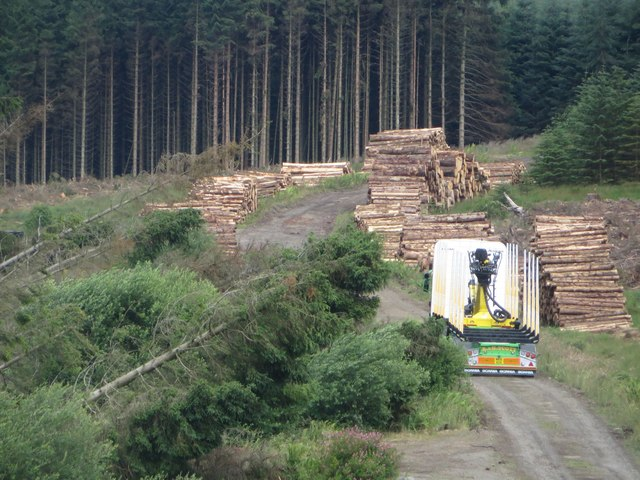 Collecting timber, Wark Forest