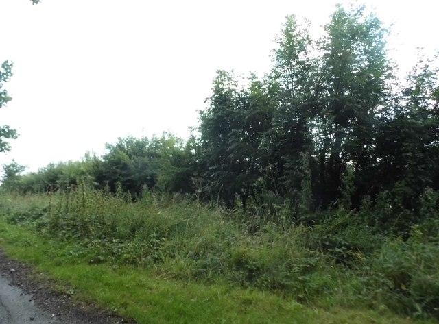 Hedgerow in Hoe Benham