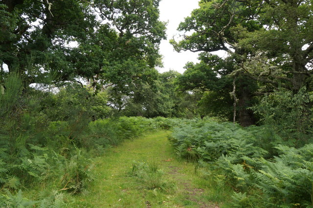 Track to the River Beauly at Eskadale