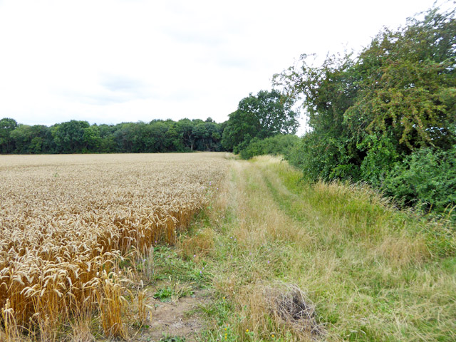 Field margin north of Apton Hall
