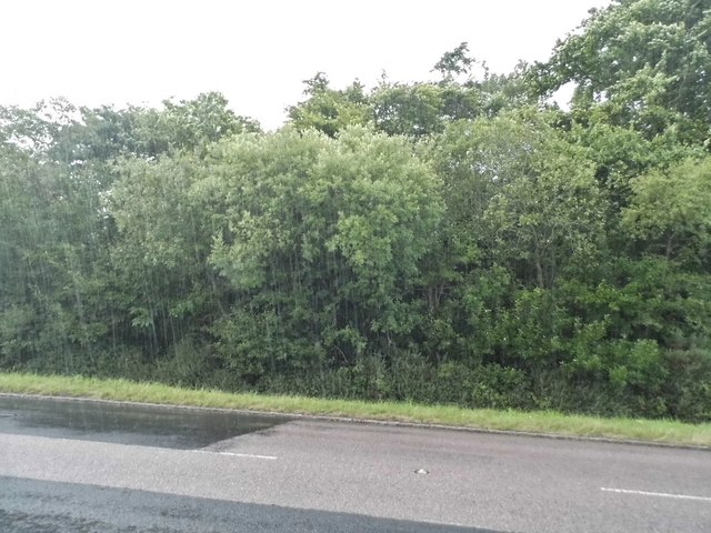 Torrential rain on Hoe Common