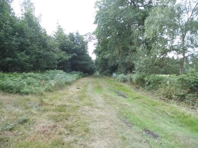Track through Scotch Wood