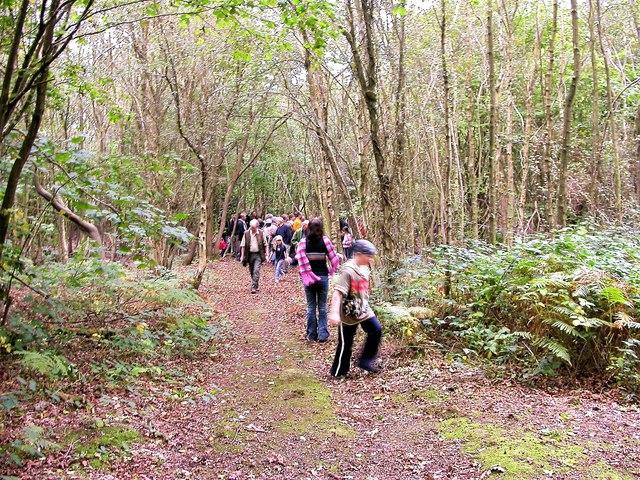 Wildlife walk in Hoads Wood, Oaklands Park
