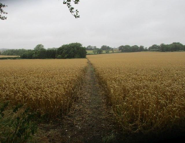 Footpath to Shalstone