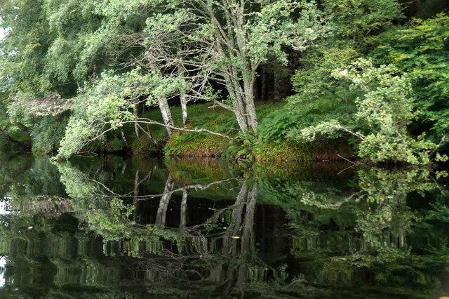 Trees on Eilean Aigas