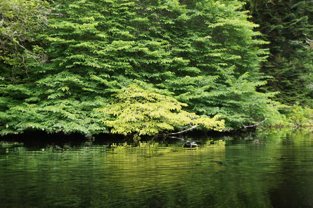 Trees beside Aigas Gorge on the River Beauly