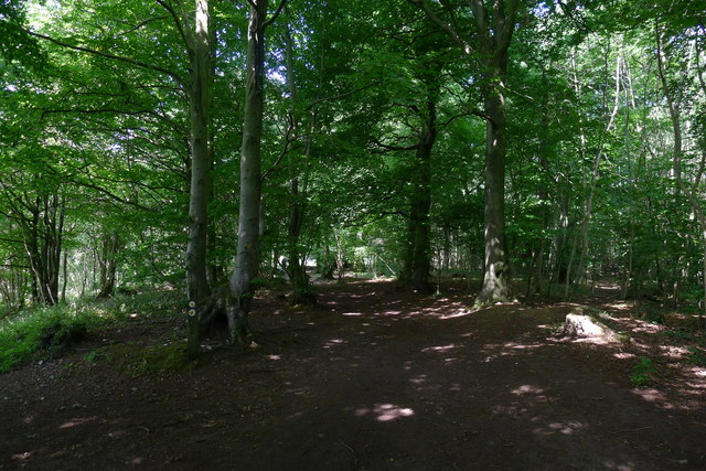 The Cotswold Way in Westridge Wood
