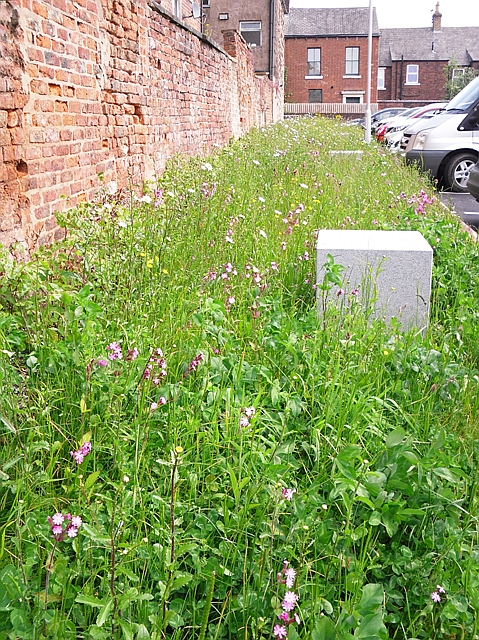 Wildflower border, Cumbria House car park