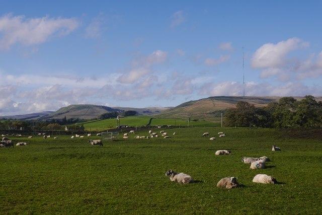 Sheep outside Hawes