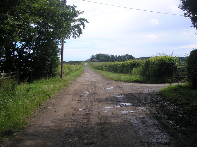 The road from Cameron