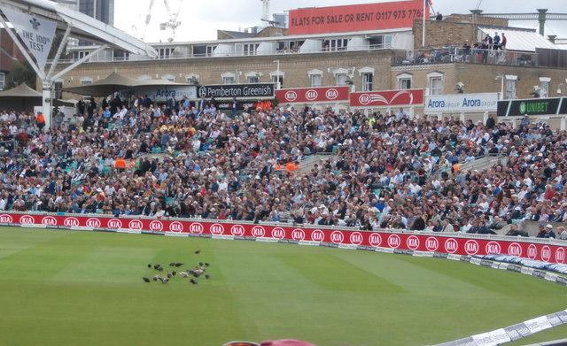Pigeons on the grass alas