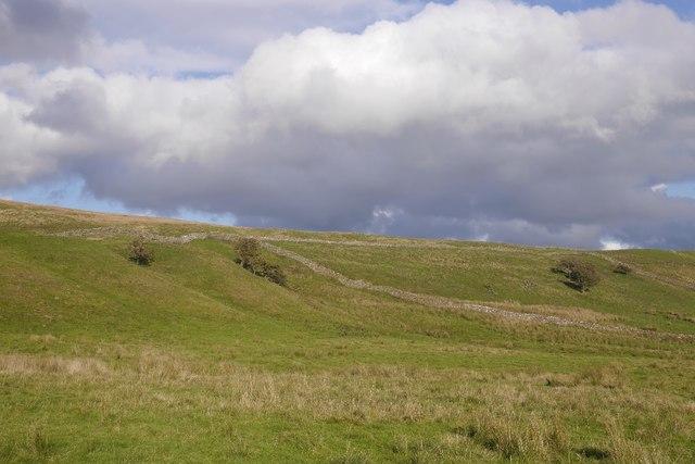 Cote Pasture