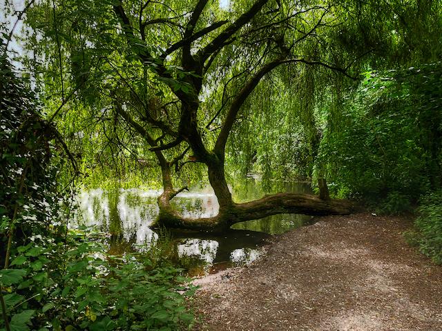 River Itchen near Eastleigh
