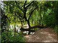 SU4619 : River Itchen near Eastleigh by David Dixon