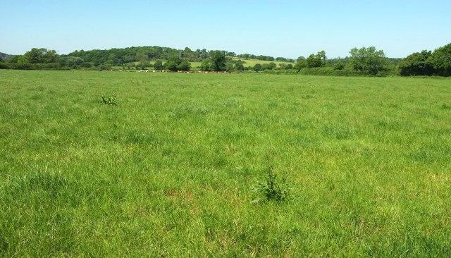 Cattle pasture near Wood Dairy Farm