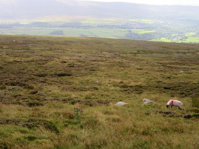 Moorland on Dunkenshaw Fell