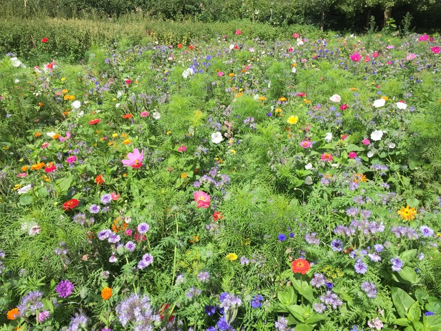 Cultivated Wild Flowers
