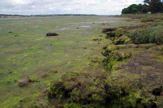 Stour Mudflats