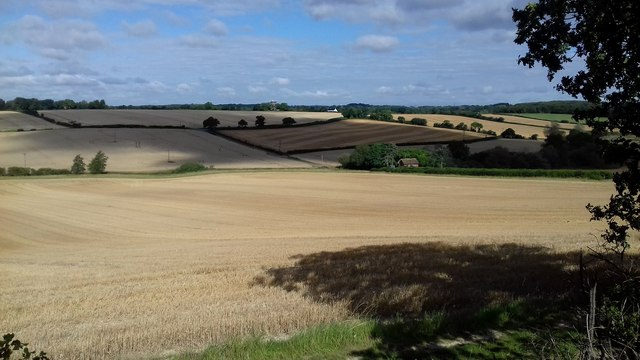Near Aston, nearly time for harvest
