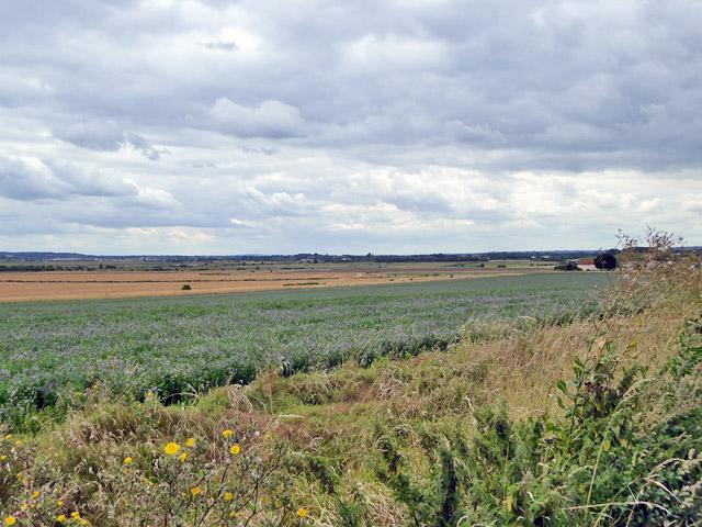 Farmland south of Lower Burnham Road