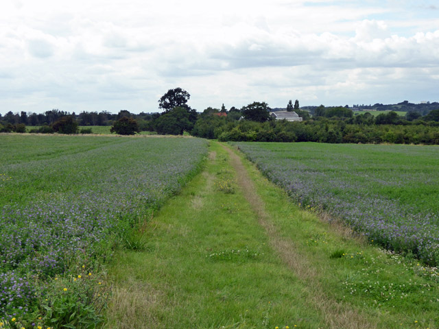 Track towards Snorehamall Grove