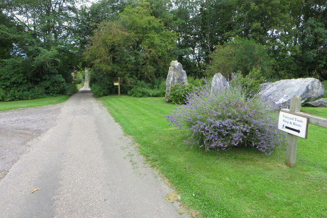Lane to the vineyard at Chilford Hall