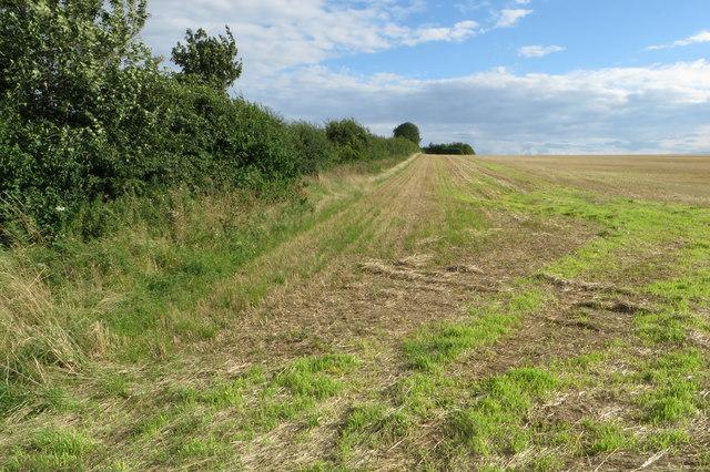 Hedge along an empty field