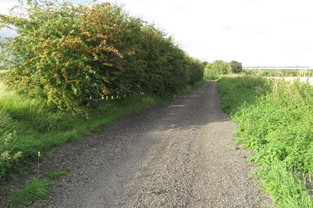 Byway and hawthorns
