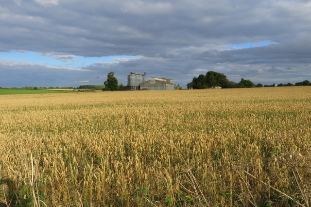 Wheatfield with Grange Farm behind