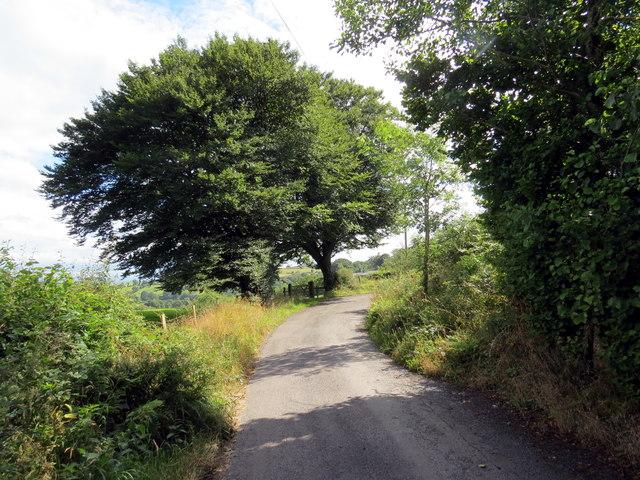 Heol fach gyda dwy ffawydden / Minor road with two beech trees