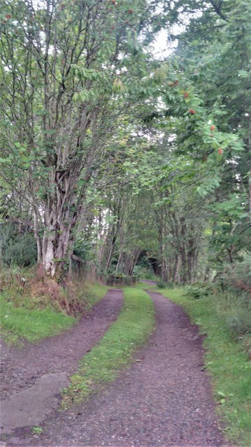 Track through woodland at Dungrianach