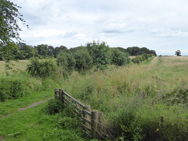The Ladies' Walk at Newhailes and a modern path
