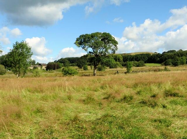 Fields in Harwood